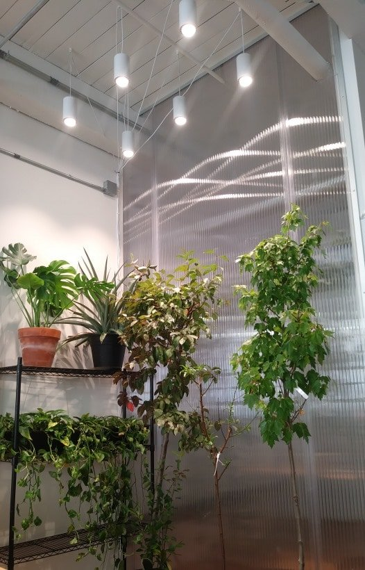Aspect Grow Lights over plants and trees in office