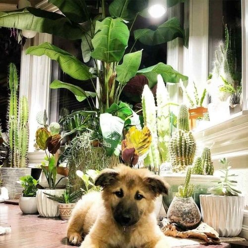 Small White Aspect™ growing cactus and succulents with a puppy