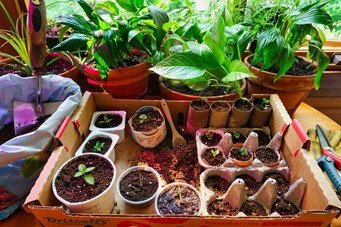 add plants to your home and office