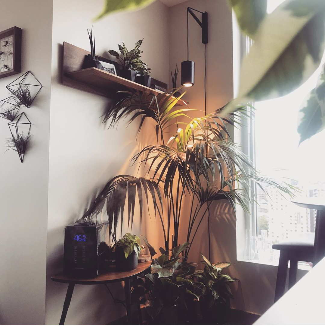 Large Black Aspect™ Plant Light with the Pinocchio wall mount
