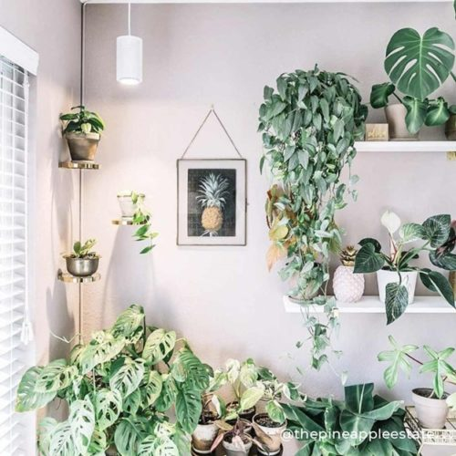 bring summer into your home